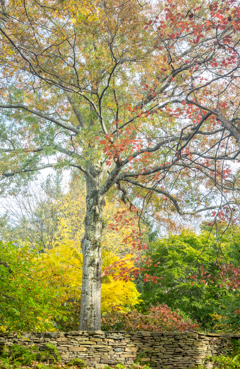 Walnut Hill Splendor – Baltimore Style