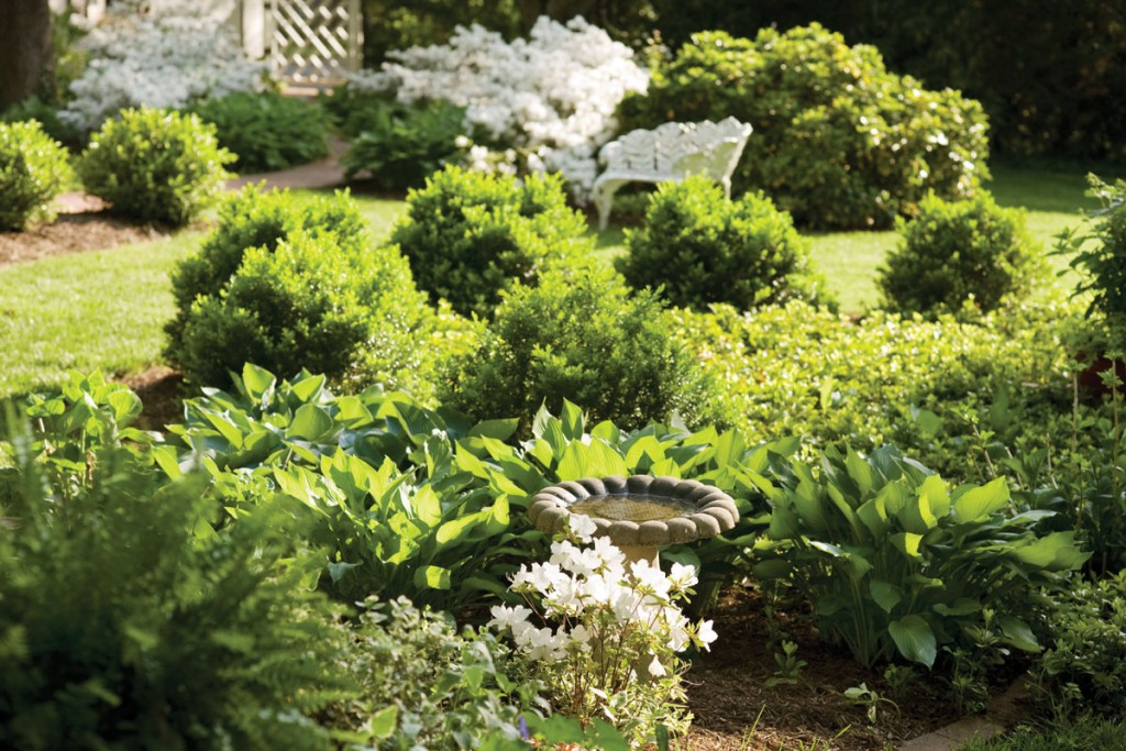 Ferns, hostas and boxwoods encircle a small bird bath, one of several in this backyard wildlife sanctuary.