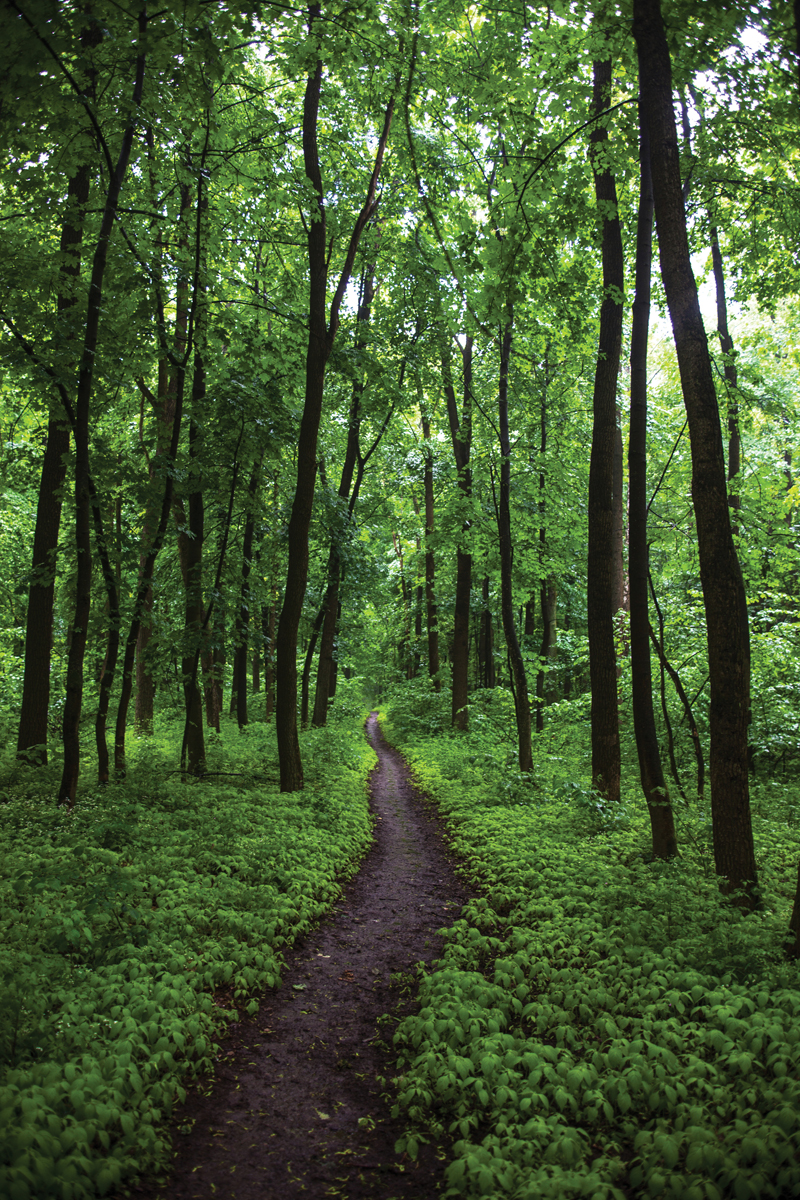 The path in a green summer forest.