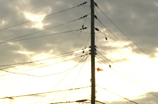 telephone-wires