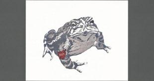 """""""Tattoo Toad"""""""