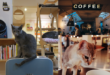 Charm Kitty Cafe Charges Fur-ward
