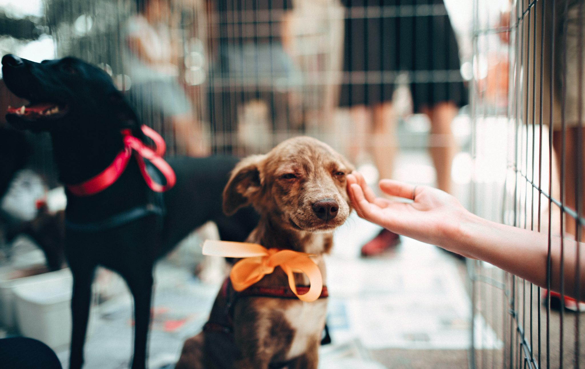 MD SPCA Launches Annual Virtual Festival for the Animals